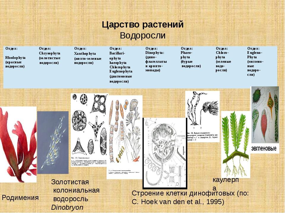 Царство растений Водоросли Родимения Золотистая колониальная водоросль Dino...