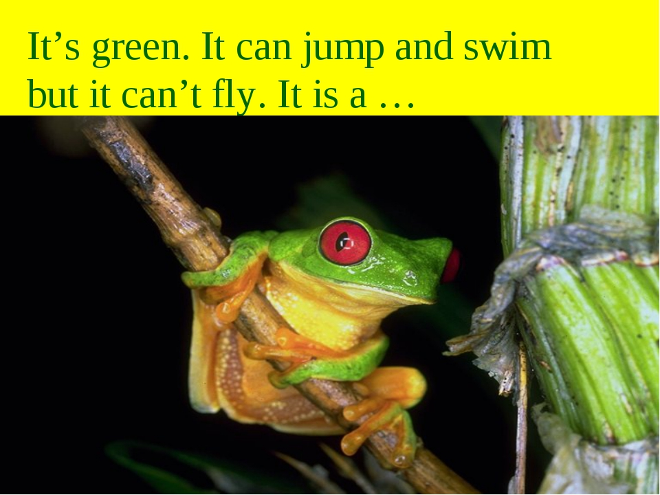 It's green. It can jump and swim but it can't fly. It is a …