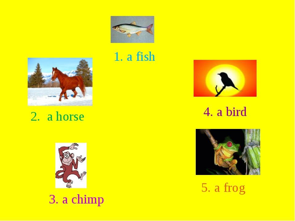 1. a fish 2. a horse 4. a bird 3. a chimp 5. a frog