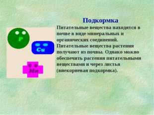 Подкормка Питательные вещества находятся в почве в виде минеральных и органич