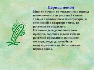 Период покоя Многие почему то считают, что период покоя комнатных растений св