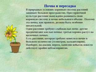 Почва и пересадка В природных условиях корневая система растений занимает бол