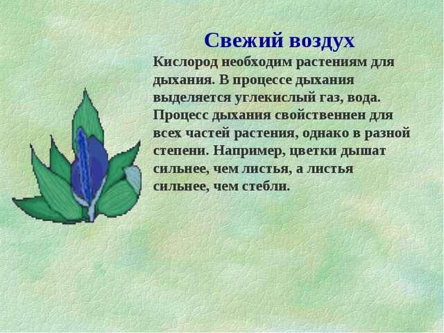 Свежий воздух Кислород необходим растениям для дыхания. В процессе дыхания вы...