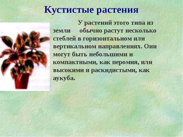 Кустистые растения  У растений этого типа из земли обычно растут несколько...