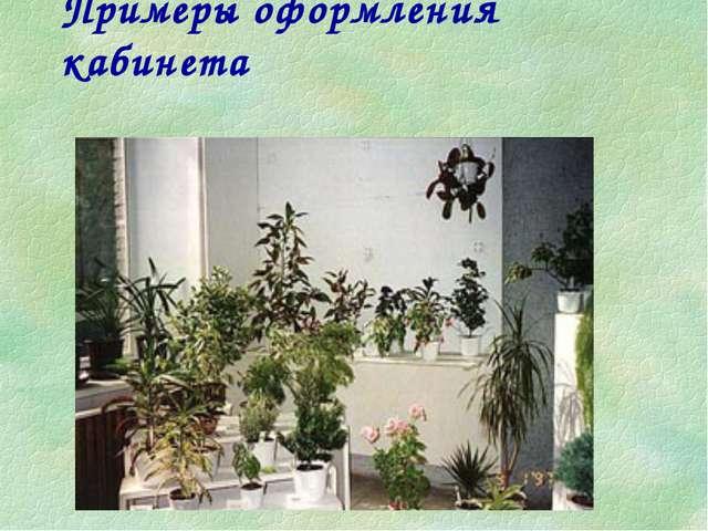 Примеры оформления кабинета