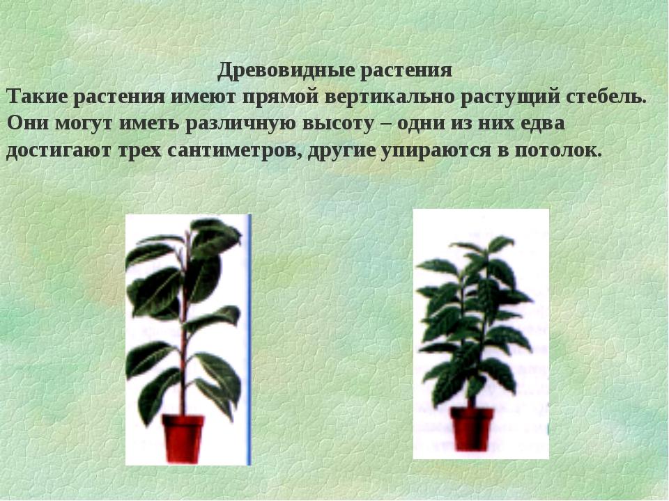 Древовидные растения Такие растения имеют прямой вертикально растущий стебель...
