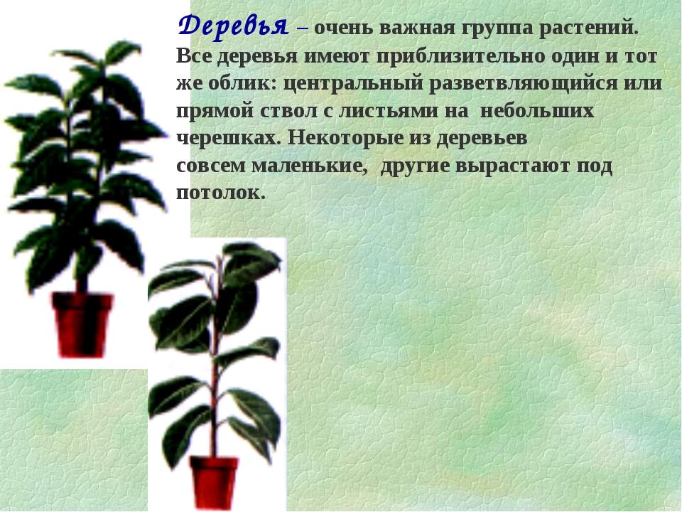 Деревья – очень важная группа растений. Все деревья имеют приблизительно один...
