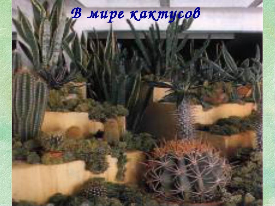 В мире кактусов