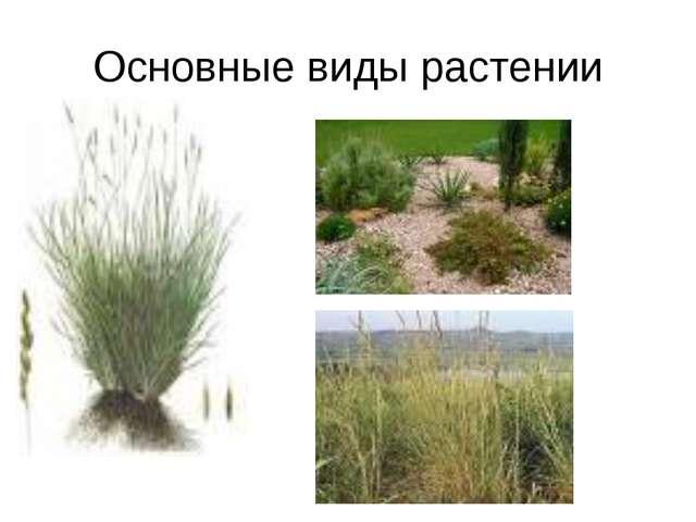 Основные виды растении