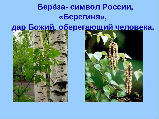 Берёза- символ России, «Берегиня», дар Божий, оберегающий человека.