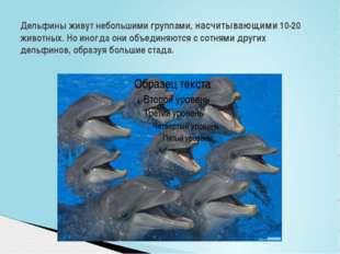 Дельфины живут небольшими группами, насчитывающими 10-20 животных. Но иногда