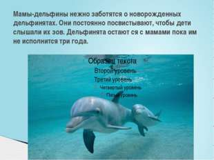 Мамы-дельфины нежно заботятся о новорожденных дельфинятах. Они постоянно посв