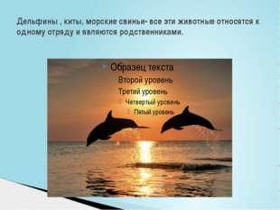 Дельфины , киты, морские свиньи- все эти животные относятся к одному отряду и