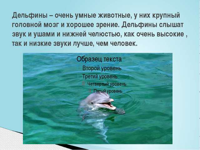 Дельфины – очень умные животные, у них крупный головной мозг и хорошее зрение...