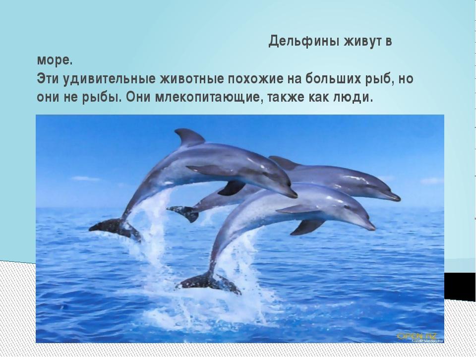 Дельфины живут в море. Эти удивительные животные похожие на больших рыб, но...