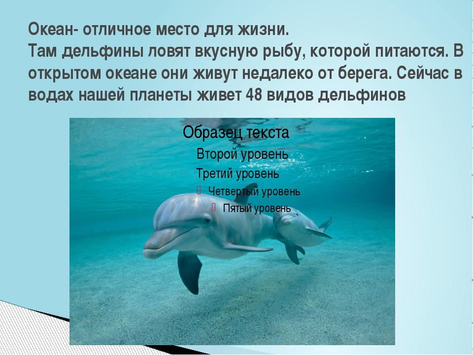 Океан- отличное место для жизни. Там дельфины ловят вкусную рыбу, которой пит...