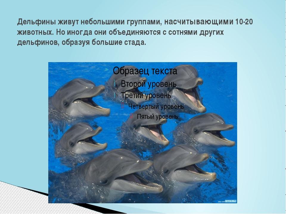 Дельфины живут небольшими группами, насчитывающими 10-20 животных. Но иногда...
