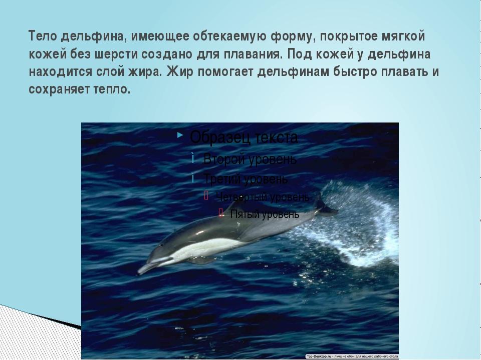 Тело дельфина, имеющее обтекаемую форму, покрытое мягкой кожей без шерсти соз...
