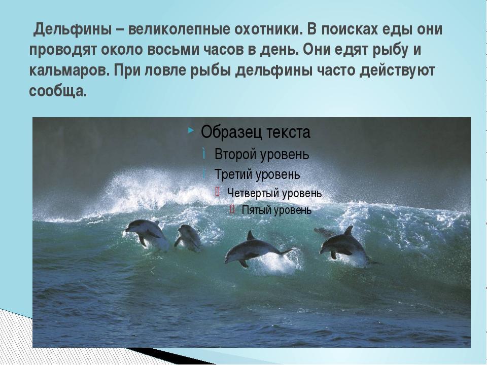 Дельфины – великолепные охотники. В поисках еды они проводят около восьми ча...