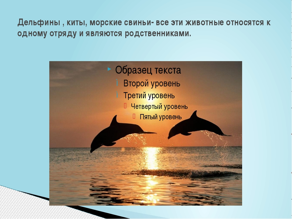 Дельфины , киты, морские свиньи- все эти животные относятся к одному отряду и...
