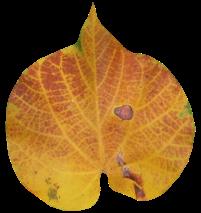Дизайнерский набор осень - Осень - Клипарты - Каталог статей - Фотошоп + от Милледи Малиновской