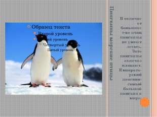 Пингвины морские птицы В отличие от большинст-ва птиц пингвины не умеют летат