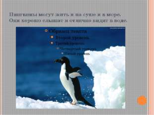 Пингвины могут жить и на суше и в море. Они хорошо слышат и отлично видят в в