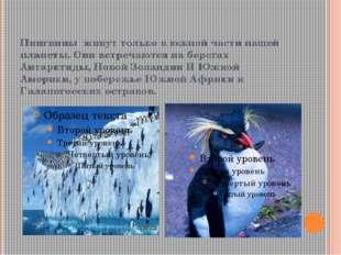 Пингвины живут только в южной части нашей планеты. Они встречаются на берегах