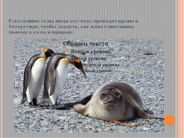 В последние годы люди все чаще проводят время в Антарктиде, чтобы увидеть, ка...