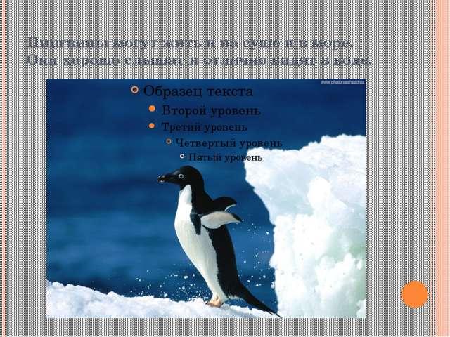 Пингвины могут жить и на суше и в море. Они хорошо слышат и отлично видят в в...
