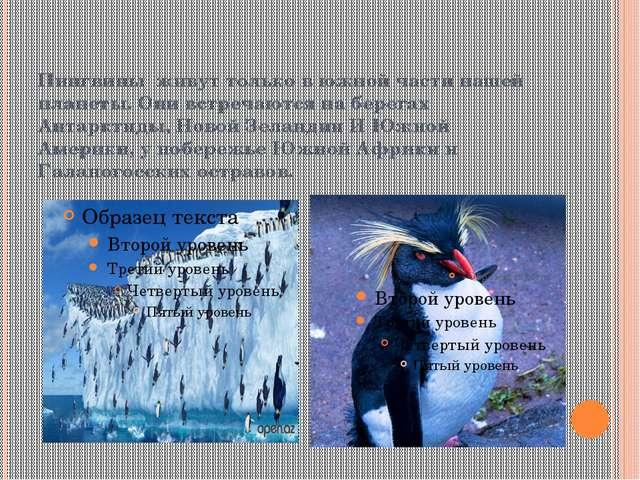 Пингвины живут только в южной части нашей планеты. Они встречаются на берегах...