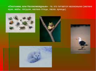 «Охотники, или Насекомоядные» - те, кто питается насекомыми (мелкие жуки, жаб