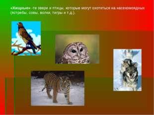 «Хищные» -те звери и птицы, которые могут охотиться на насекомоядных (ястребы
