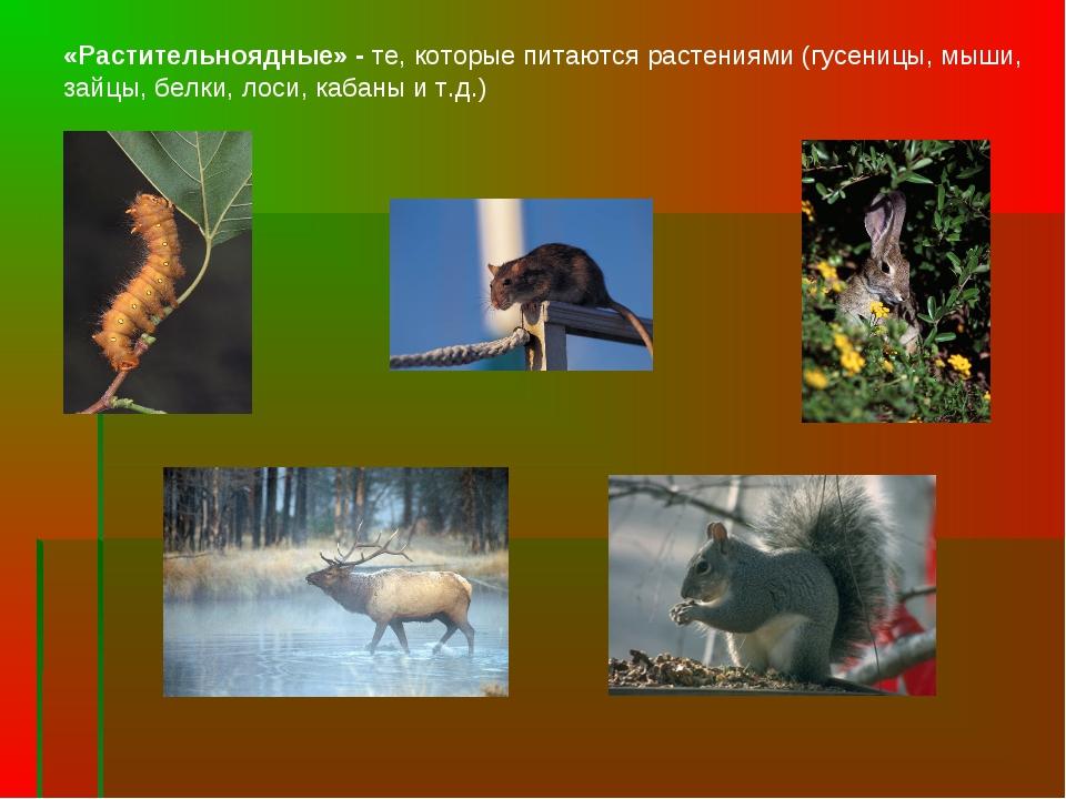 «Растительноядные» - те, которые питаются растениями (гусеницы, мыши, зайцы,...