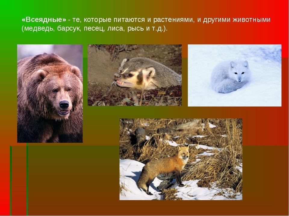 «Всеядные» - те, которые питаются и растениями, и другими животными (медведь,...