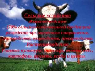 Сельское хозяйство Животноводство (70% сельскохозяйственной продукции) развед