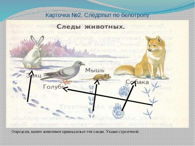 Определи, каким животным принадлежат эти следы. Укажи стрелочкой. Карточка №...