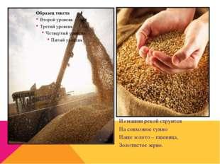 Из машин рекой струится На совхозное гумно Наше золото – пшеница, Золотистое