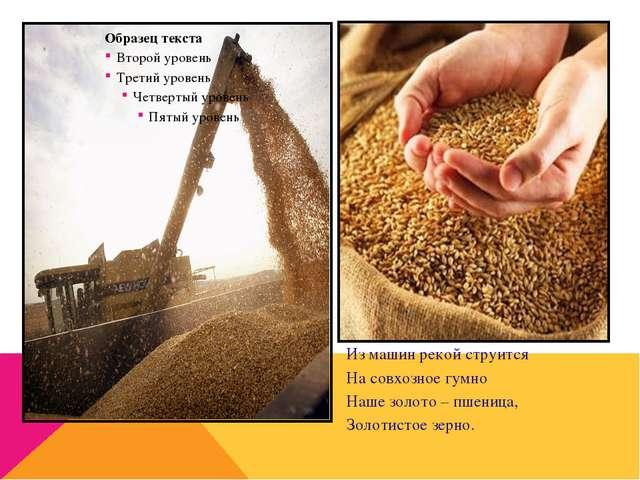 Из машин рекой струится На совхозное гумно Наше золото – пшеница, Золотистое...