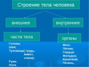 Строение тела человека внешнее части тела внутреннее органы Голова; Шея; Тул