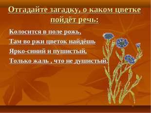 Отгадайте загадку, о каком цветке пойдёт речь: Колосится в поле рожь, Там во