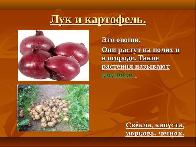 Лук и картофель. Это овощи. Они растут на полях и в огороде. Такие растения н...