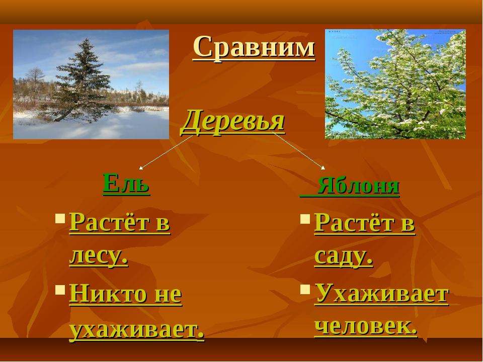 Сравним Ель Растёт в лесу. Никто не ухаживает. Яблоня Растёт в саду. Ухаживае...
