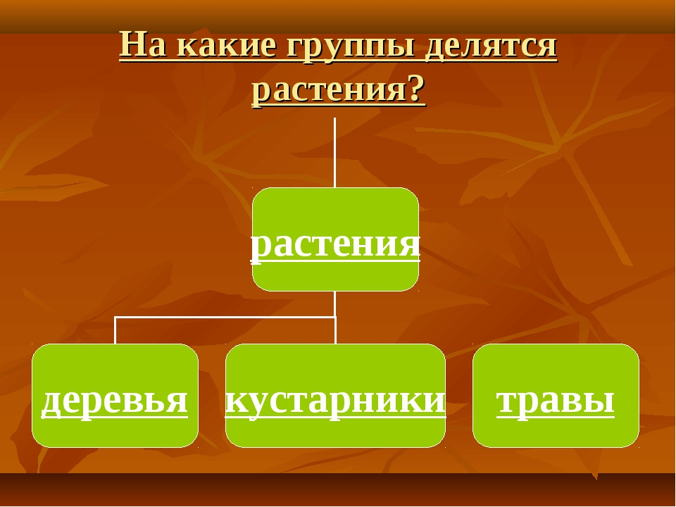 На какие группы делятся растения?