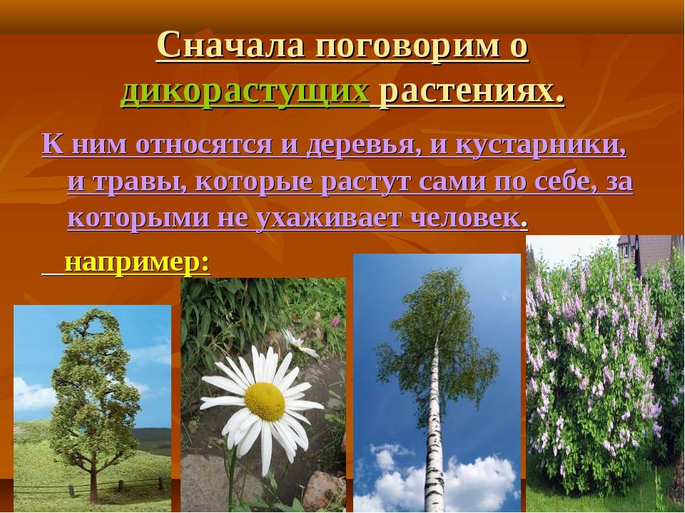 Сначала поговорим о дикорастущих растениях. К ним относятся и деревья, и куст...