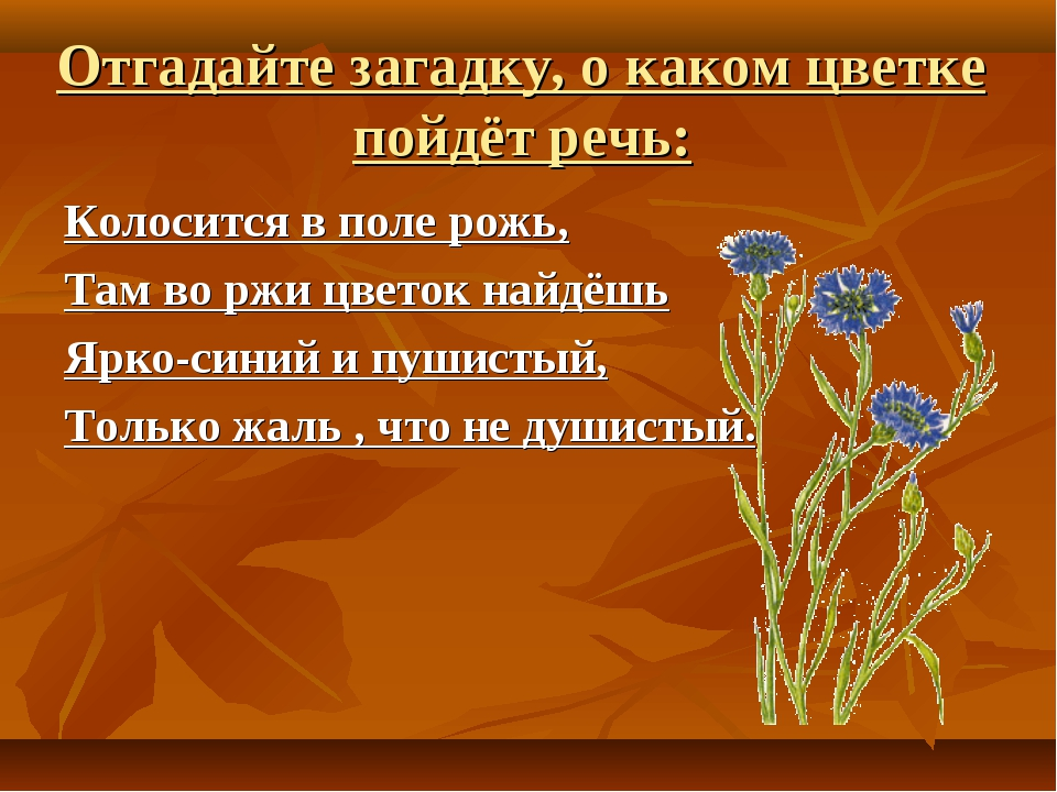 Отгадайте загадку, о каком цветке пойдёт речь: Колосится в поле рожь, Там во...