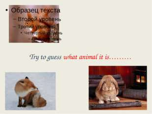 Try to guess what animal it is………