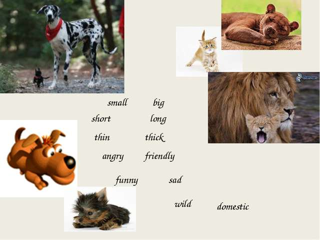 small big short long thin thick angry friendly funny sad wild domestic