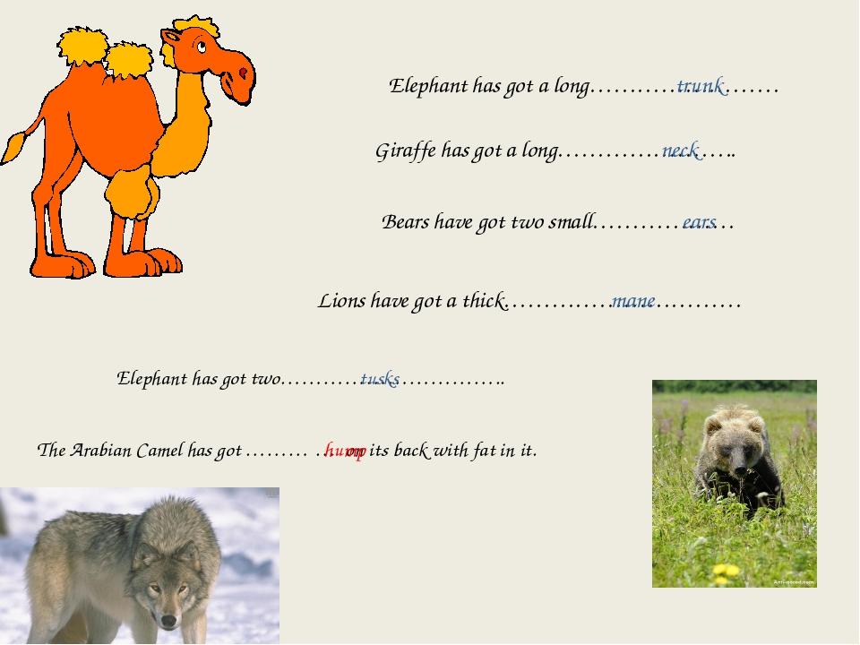Elephant has got a long…………………… trunk Giraffe has got a long………………….. neck Be...