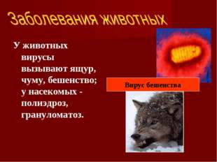 У животных вирусы вызывают ящур, чуму, бешенство; у насекомых - полиэдроз, гр